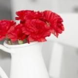 Cẩm chướng đỏ