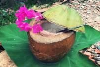 Cách nấu cơm trái dừa thơm ngon