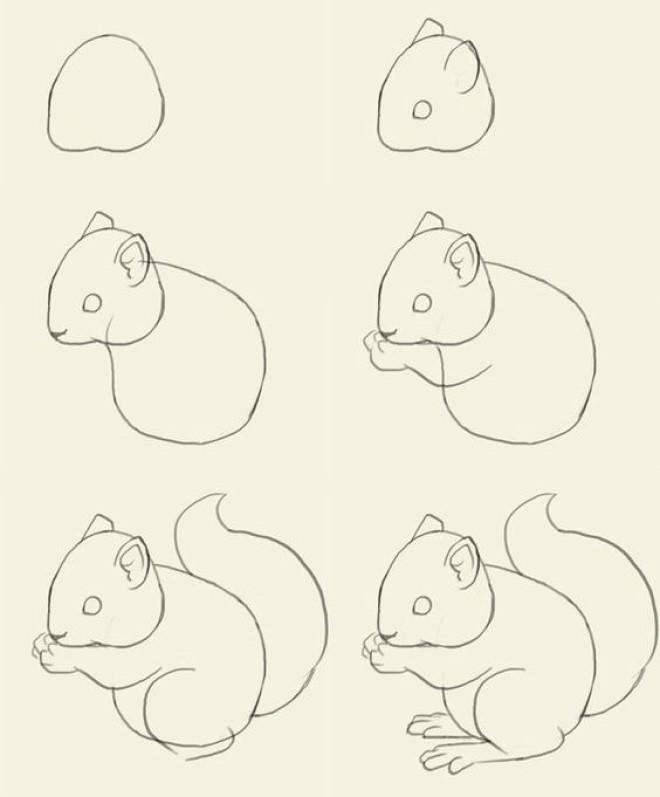 Cách vẽ hình chú sóc