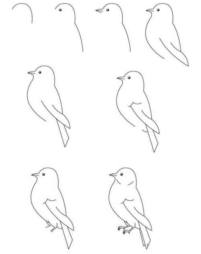 Vẽ hình chú chim sẻ